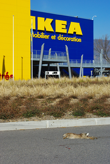 """lapin en suédois, c'est """"kaniner"""", presque une anagramme avec trois consonnes en trop"""